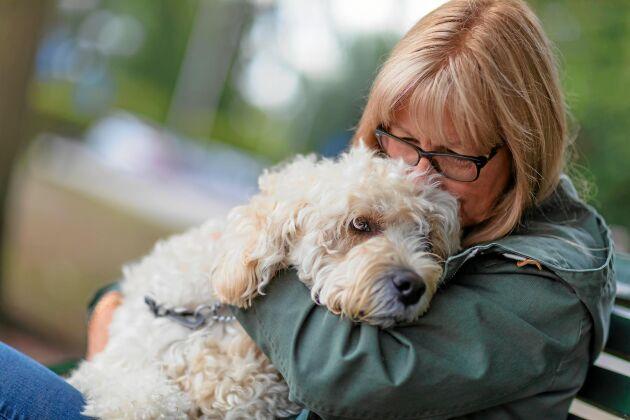 Svenska hundar får högt betyg som tröstare när det känns svårt.