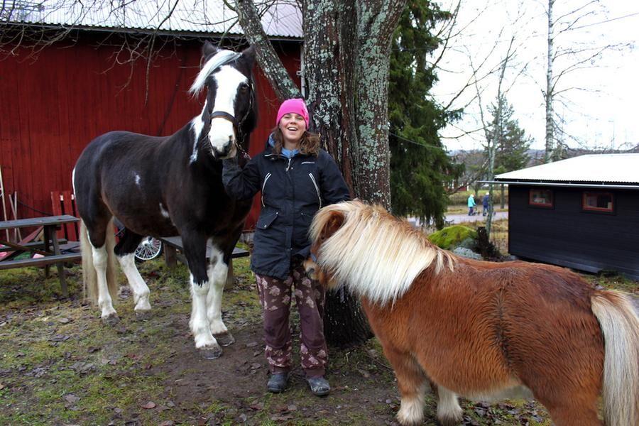 Älskar hästar. Lisa med tinkerhästen Maggie, 20 år och shettisen Pirat, 9 år
