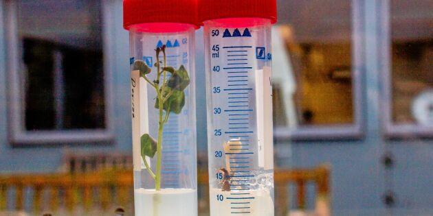 Krav att släppa fram ny genteknik i EU