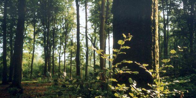 Produktion och miljö i danskt skogsprogram