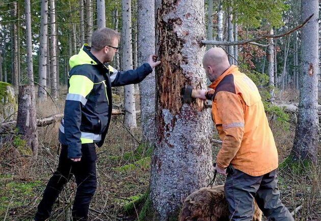 I år var angreppen av granbarkborre i Götaland rekordstora och till nästa år väntas de bli minst lika omfattande. Nu bildas en krisgrupp för att bromsa angreppen och skogsägare uppmanas ha koll på sin skog.