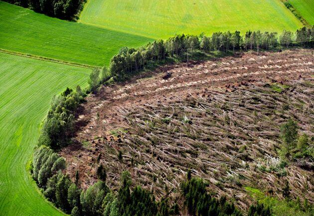 Tragiskt men vackert. Stormen lämnade spår som fick landskapet att närmast se ut som ett konstverk. Här en bild tagen i trakterna av Vislanda ett drygt halvår efter stormen.