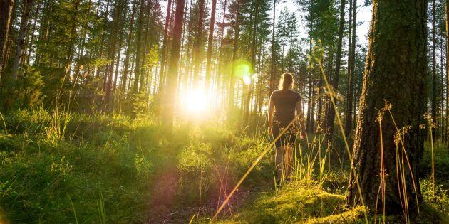 Dags för 100 sociala skogar - jag är redo, är du?
