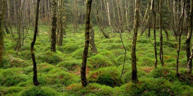 Billigare skogsskydd i norr