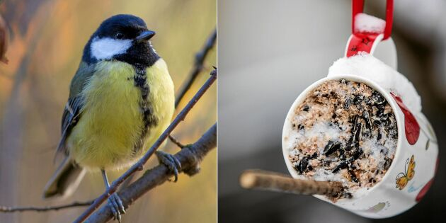 Gör en fågelmatare av en kaffemugg – snabbt & mysigt pyssel