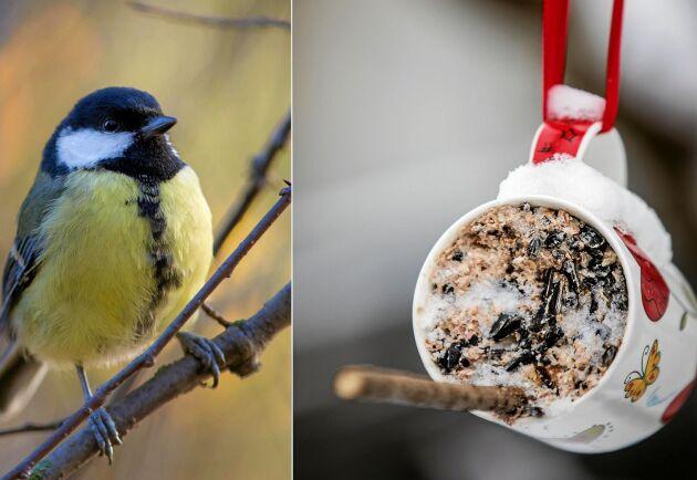 Att mata fåglarna behöver inte vara svårt.
