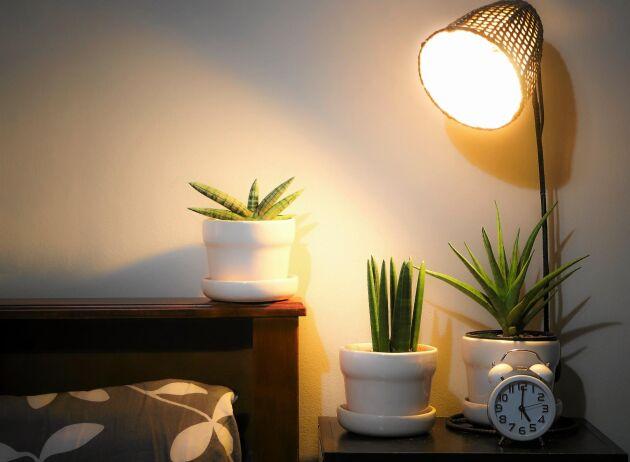 Krukväxter som står för skuggigt kan ha hjälp med belysning. Snyggt blir det också.