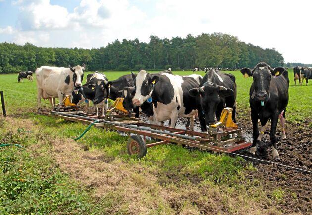 """""""Jag befarar att förordningar kommer att förändras, bland annat vad gäller djurskyddet"""", säger Monika Windbergs vid Deutscher Raiffeisenverband."""