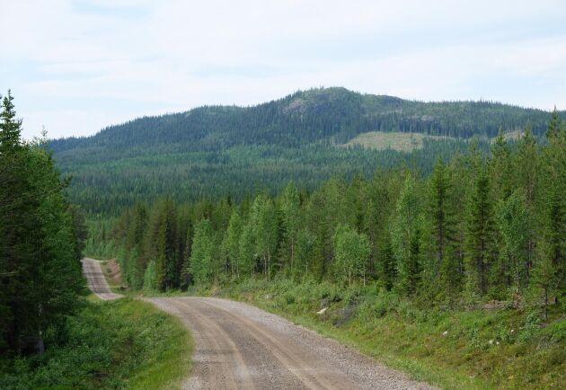 Till och med november i år hade den avverkningsansökta arealen i fjällnära skog femfaldigats.
