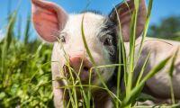 Klen utdelning på EU:s strategi för djurvälfärd