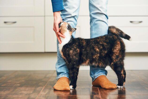 Äntligen hemma! Katten har koll på att du kommer med maten.