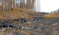 Brandskadad skog börjar avverkas