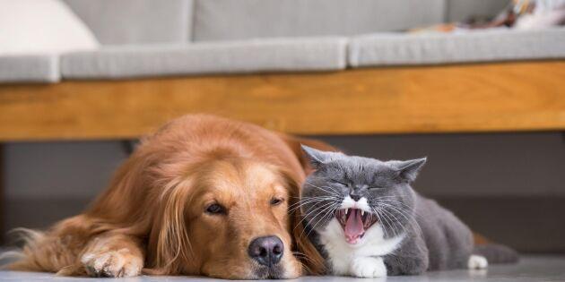 Hundar och katter med klös