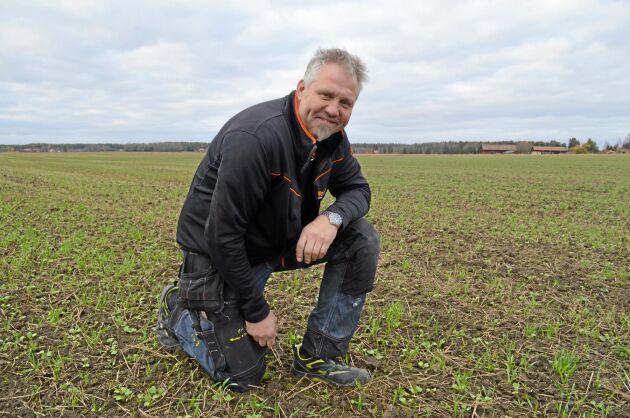 Christer Abrahamsson vill odla mellangrödor utan vare sig plog eller glyfosat. I år har han utökat arealen från 30 till 100 hektar.