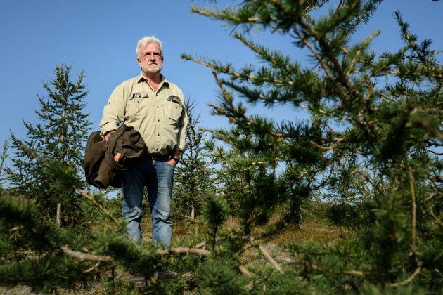 Saemundur Thorvaldsson, skogsskötselspecialist vid den isländska skogsstyrelsen, tittar till ett gäng spirande lärkträd i Flókadalur på västra Island.