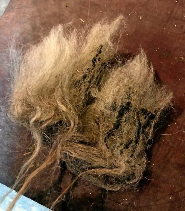 Så här hårt smutsad ull går rakt ner i soppåsen.