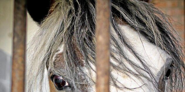 Nya hästskandalen – 66 anhållna
