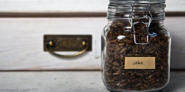 Fortsatt förbjudet att sälja insekter som mat i Sverige
