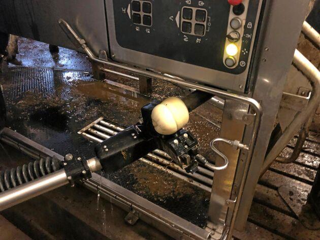 Roboten tvättas mellan varje mjölkning med hjälp av en speciell tvållösning.