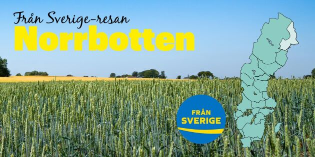 Från Sverige-resan: Upptäck Norrbottens smaker