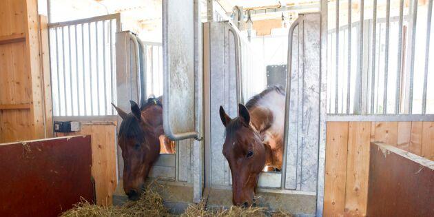 Sverige får en hästföretagarstrategi