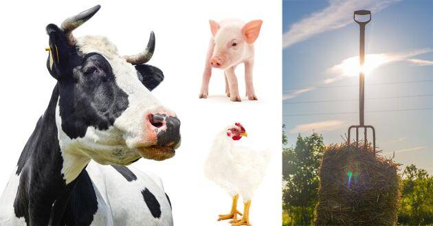 Sju bönder tävlar om nyinstiftade priset Årets klimatbonde. Det är White Guide Green och Svenskt Sigill som vill uppmärksamma bönder som jobbar hårt med klimatfrågan.