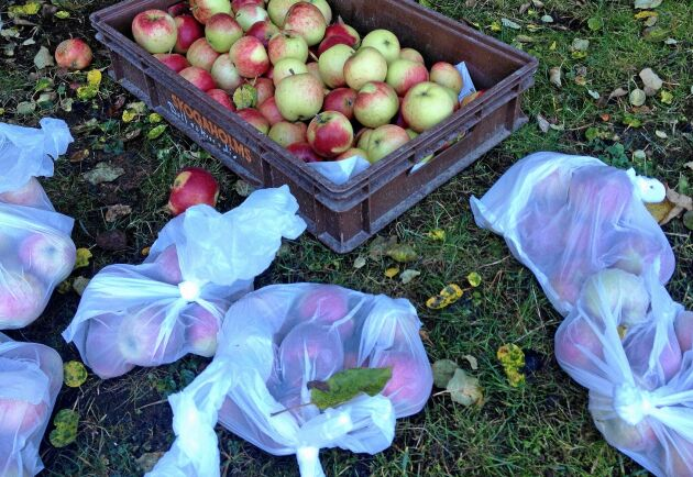 Tunna plastpåsar kan vara lösningen på äppelproblemet.