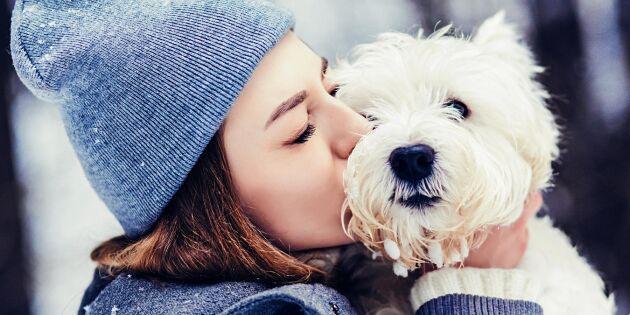 Undersökning visar: Svenskar tar priset i kärlek till hunden