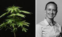 Holländsk råvara i cannabisfodret