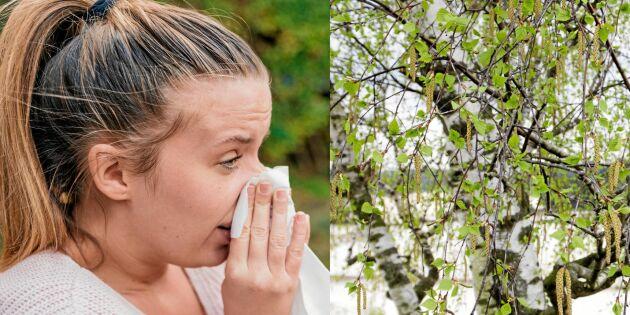 Pollenallergin – så behandlar du plågan