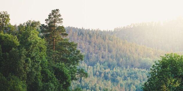 Risk att investerare leds bort från svenska skogen