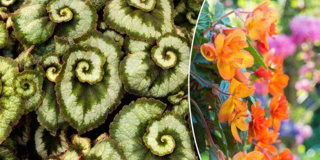Det här är vårens trendigaste blomma!