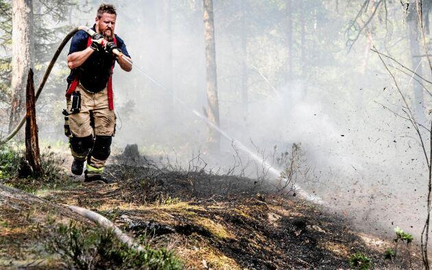 Under maj var det många anlagda aspluddsbränder i landet. Arkivbild.