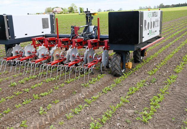 Nordic Sugar i Danmark tillsammans med danska Agrointelli utvärderar i ett försök ekonomin för ogräsbekämpning med hjälp av robot på den danska ön Falster.