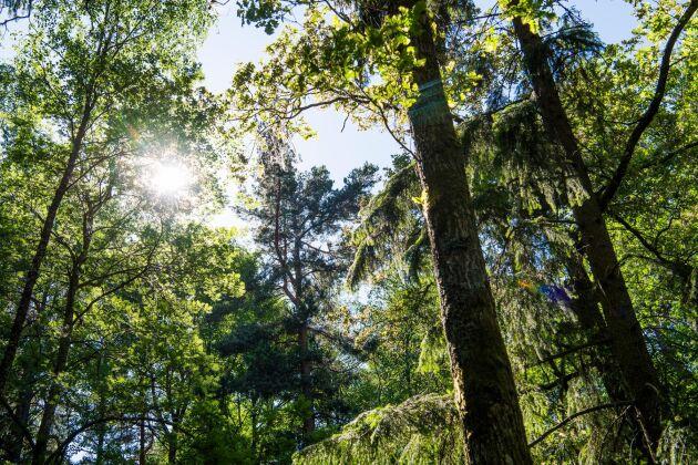 Doften av park- och skogmiljö är avstressande, enligt ny forskning. Arkivbild.