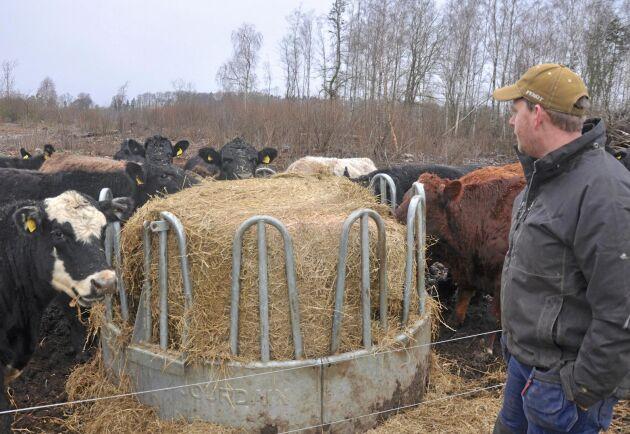 Robin Svedlund driver en av de gårdar på Öland som drabbades hårt av extremtorkan förra året.