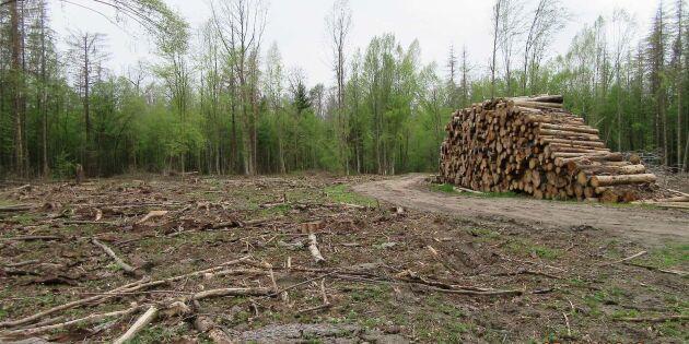 4 000 hektar urskog påverkades av avverkning