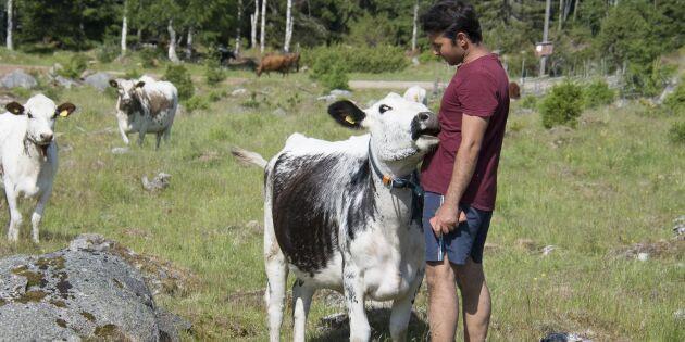Sveriges yngste fäbodbrukare ska utvisas