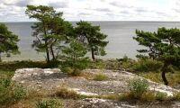 Skogsstyrelsen tar över på Gotland igen