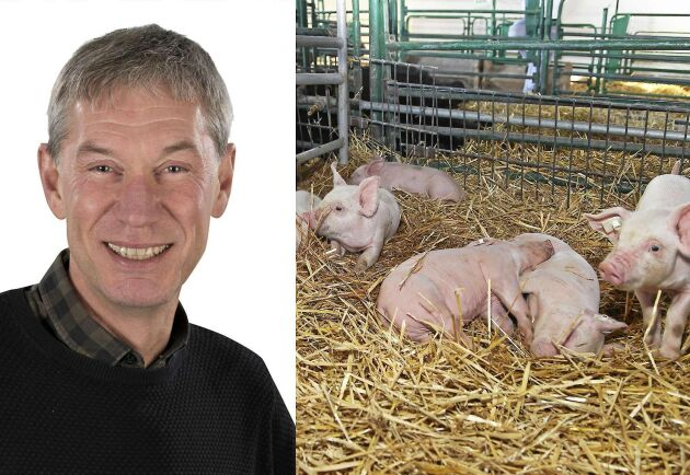 Stefan Nypelius är rådgivare på LRF Konsult och konstaterar att grisbönder var särskilt plågade av sommartorkan.