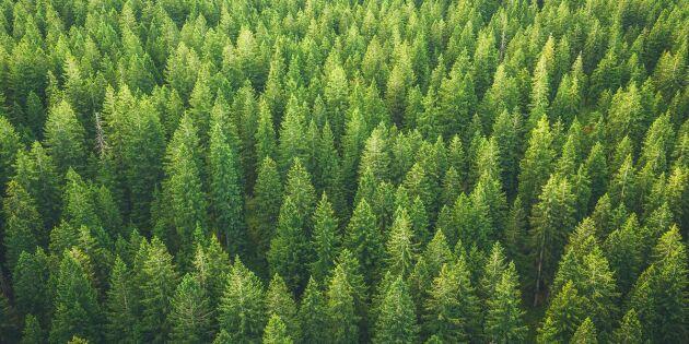 Äganderätten i skogen –här är de viktigaste milstolparna