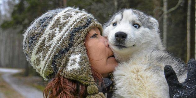 Hundsporten som blivit het utan snö