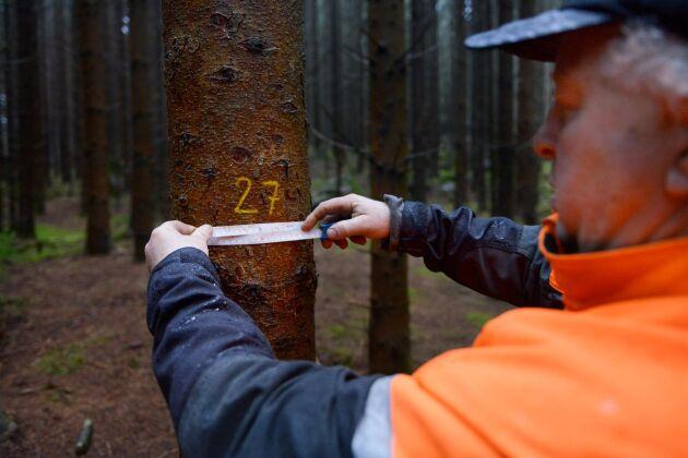 Noggrann dokumentation över tillväxten är A och O för bröderna. Det är på siffror de bygger sina slutsatser om hur skogen ska skötas.