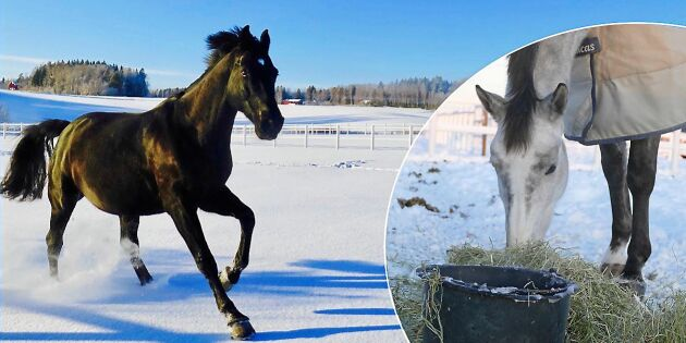 Vatten i kylan: Så undviker du att hästen drabbas av uttorkning