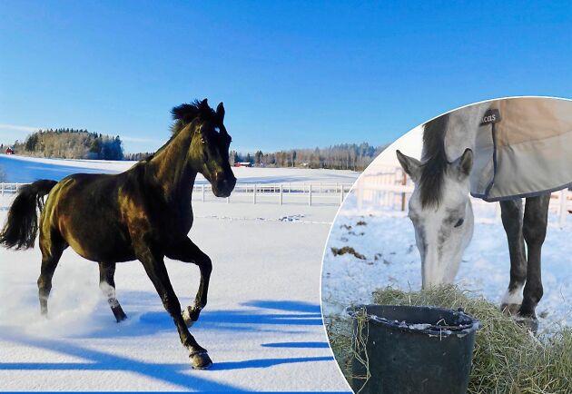 Var extra noga med vattnet när det är kallt. På vintern höjs annars risken för kolik och uttorkning.