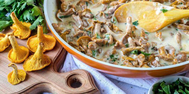 Krämig kantarellstuvning – perfekt på mackan eller i pastan