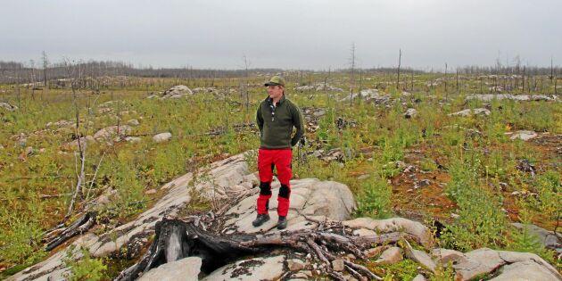 Här gör Oskars skog comeback efter branden