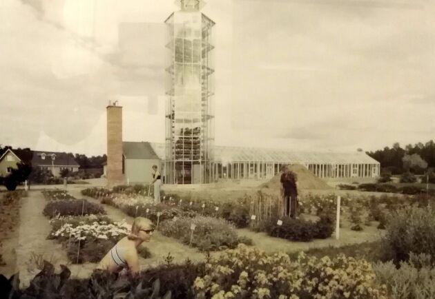 Gammal bild av tornväxthus.