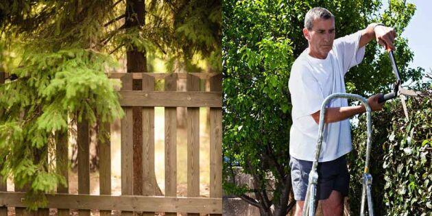 Vill du också klippa grannens träd för kvällssolen? Läs detta först – det kan stå dig dyrt