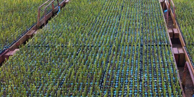Försäljningen av skogsplantor ökade
